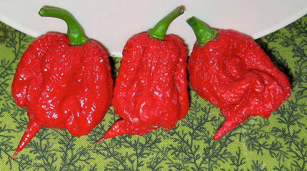 Carolina Reaper chile peppers